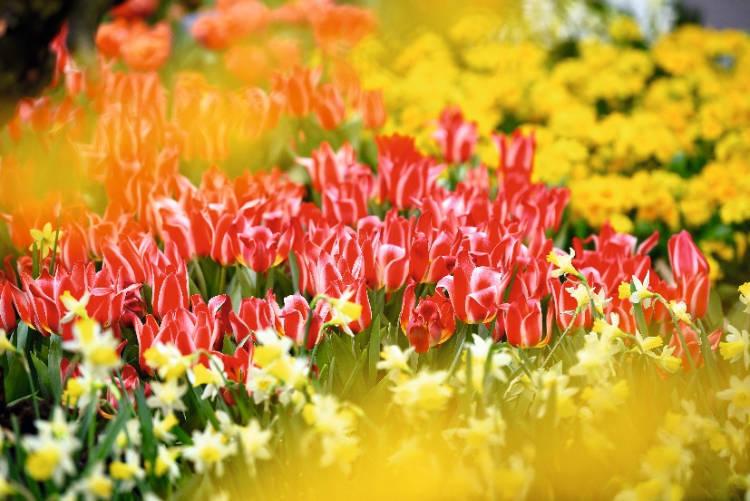Geduld ist eine Gottesgabe, wie ein Feld mit bunten Blumen